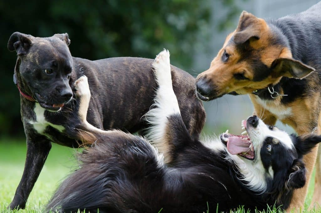 10 facts to know about Border Collies
