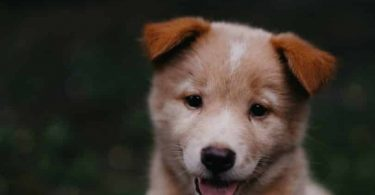 The best dogs for new adopters.