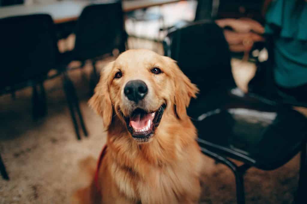The best dogs for companionship.
