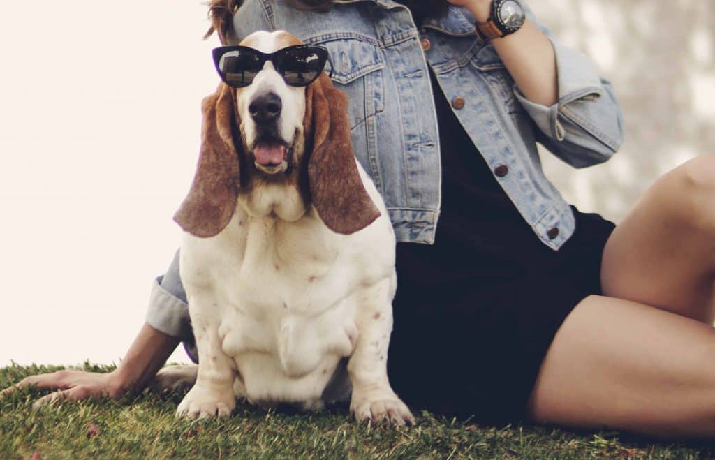 Top dogs that make great companions.