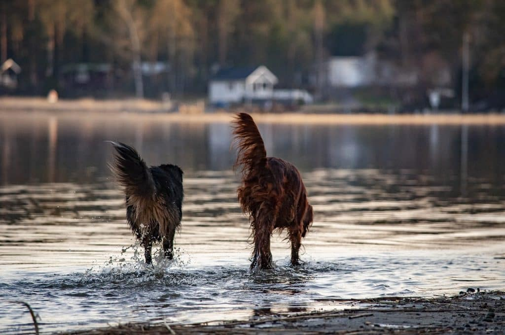 The best water dogs.