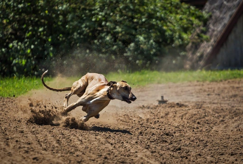 Incredibly fast dogs.