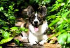 Top Dogs That Are The Healthiest
